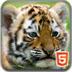 寻找大老虎
