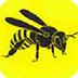 大黄蜂来袭