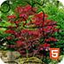 日式花园拼拼看