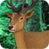 救援受伤的小鹿
